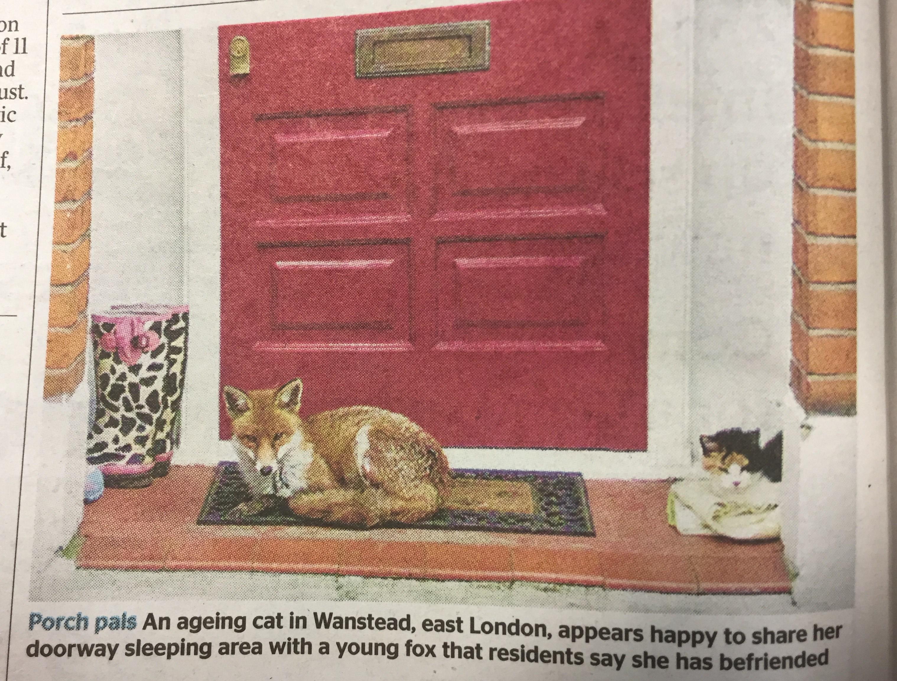 wanstead_fox